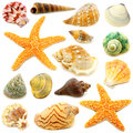 Seashells assortment of sea shells individually isolated on white Stock Photography
