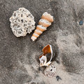 Seashells on a beach Royalty Free Stock Image