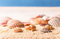 Seashells at the beach Royalty Free Stock Photo