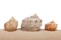 Seashells on beach  on a white background Royalty Free Stock Photo