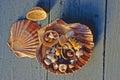 Seashells on blue wood Stock Image