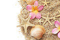 Seashells border sand and frame isolated on white background summer Stock Images