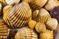 Seashells collection isolated seashell background Stock Photography