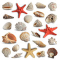 Seashells collection of isolated on white background Royalty Free Stock Photos