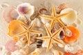 Seashells group Royalty Free Stock Image