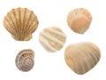 Seashells isolated on the white background Stock Photo