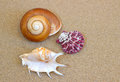 Seashells from mediterranean sea souvenir from vacation Royalty Free Stock Images
