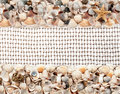 Seashells on the net for fishing background of Royalty Free Stock Images