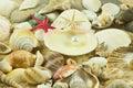 Seashells pearl starfish on sand star waterlife Stock Photos
