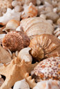 Seashells and pebbles background, natural seashore stones