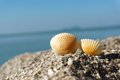 Seashells on rock against clear blue sky Royalty Free Stock Photos