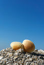 Seashells on rock Royalty Free Stock Photo