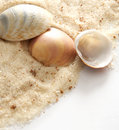 Seashells and sand Stock Photography