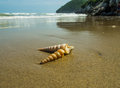 Seashells on the sand. Royalty Free Stock Photo