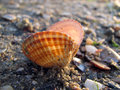 Seashells in the sand on the black sea Royalty Free Stock Image