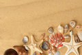 Seashells on sand close up Royalty Free Stock Images