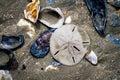 Seashells and Sand Dollar at Botany Bay Beach