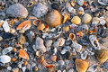 Seashells on sandy beach a wide variety of display texture and color a while photographed in early morning light Royalty Free Stock Photography