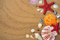 Seashells sea shells and stars on sand Stock Image