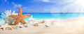 Seashells on seashore in tropical beach summer holiday background Royalty Free Stock Images
