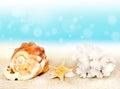 Seashells on seashore in tropical beach Royalty Free Stock Photo