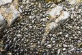 Seashells and seaweed in shallow water. Close up image