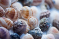 Seashells selection of various on bright background Royalty Free Stock Photo