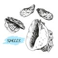 Seashells set of hand drawn graphic illustrations Stock Photography