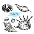 Seashells set of hand drawn graphic illustrations Stock Images
