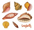 Seashells set or mollusca different forms. sea creature. engraved hand drawn in old sketch, vintage style. nautical or