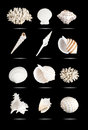 Seashells set white isolated on black Stock Photos
