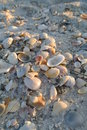 Seashells these are shells o the beach Royalty Free Stock Images