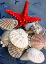 Seashells and starfish Royalty Free Stock Photography