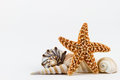 Seashells and a starfish. Royalty Free Stock Photography