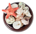 Seashells and starfish in a box Stock Images
