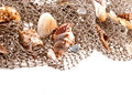 Seashells and starfish on the fishing network Stock Photo