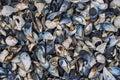 Seashells variety on the beach Royalty Free Stock Photo
