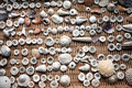 Seashells in various sizes Royalty Free Stock Images