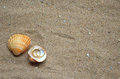 Seashells and wedding rings on the sand two two a background of an ocean beach Royalty Free Stock Photos