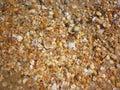 Seashells on wet sand beach at hot sun summer day. Royalty Free Stock Photo