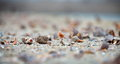 Seashells on wet sand at shore Stock Images