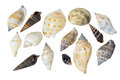 Seashells on a white background Royalty Free Stock Photo