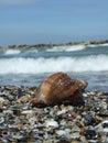 Seashore in constanta city romania Royalty Free Stock Image