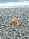 Seashore in constanta city romania Royalty Free Stock Photography