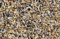 Seashore with sea shells many close up Royalty Free Stock Images