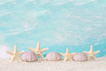 Seaside beach shells at the sandy with as background maritime Stock Images