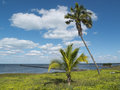 Seaside landscape in cuba a palm tree a tropical plant a pontoon on the sea and a cloudy and sunny sky the background Stock Image