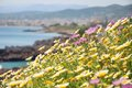 Seaside meadow in bloom in springtime on the island of crete greece Royalty Free Stock Photos