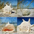 Seasnail house collage with beautiful sea snail houses Stock Photo