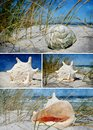 Seasnail house collage with beautiful sea snail houses Stock Photography